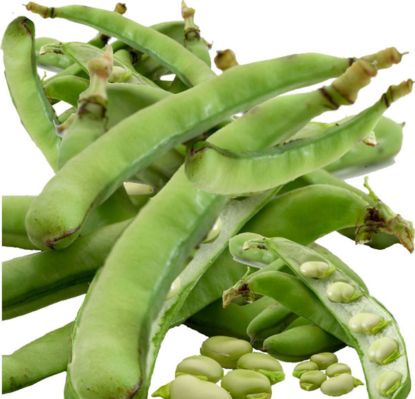 Health Properties and Nutrition Guide | Beans