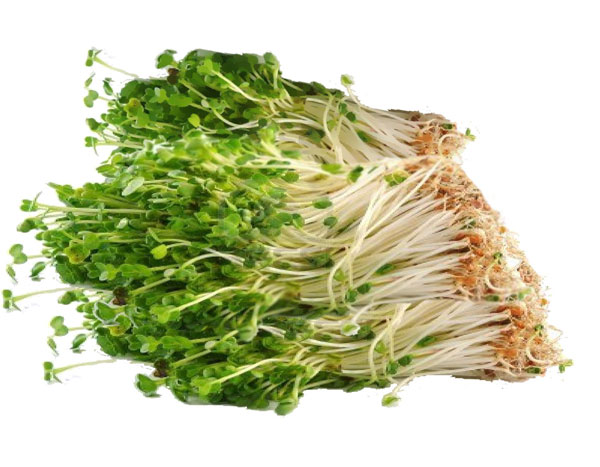 Health Facts , Nutrition Guide of Bean sprouts