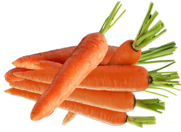 Carrot , Uses , Health , Nutrition
