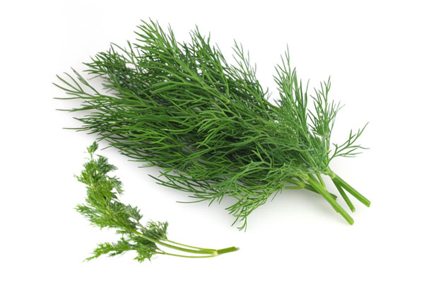 Dill : Health Summary , Nutrition And Uses