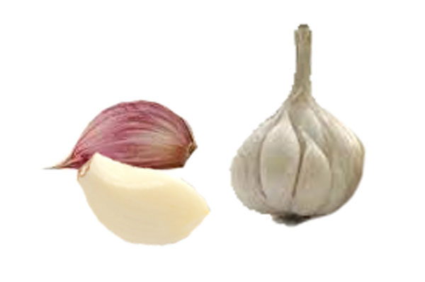 Garlic | Health Properties and Nutrition Facts