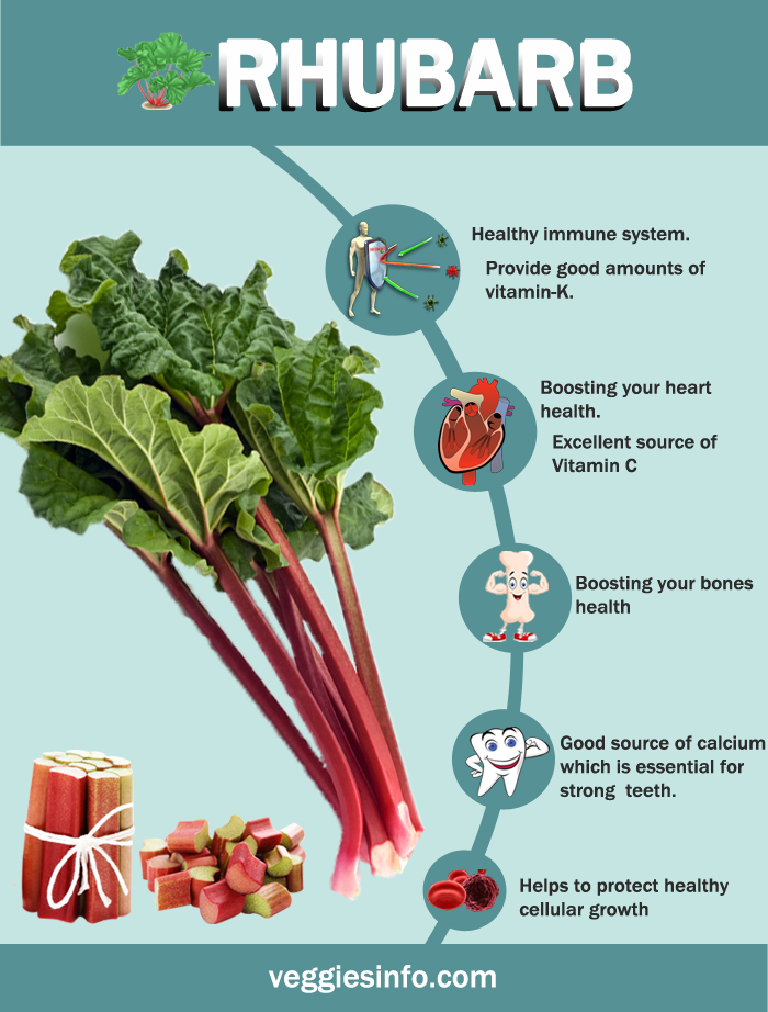 Rhubarb Health Properties Amp Nutrition Values Veggies Info