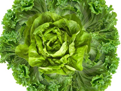 Lettuce Health Requirements and Nutrition Summary