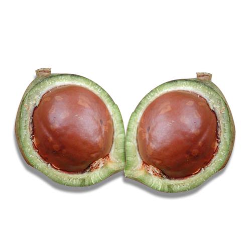 Mature Macadamia Uses and Health Benefits
