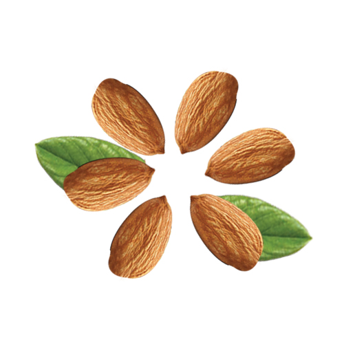 Almond Nuts Beneficial Properties & Health Facts