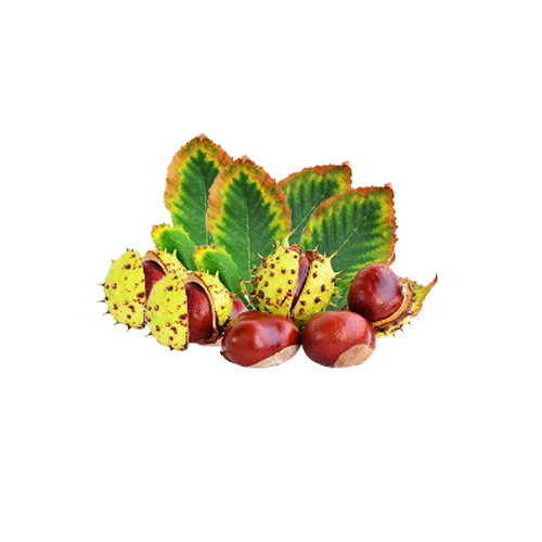 American Larger Chestnuts Health Facts