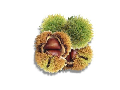 Edible Chinese Chestnut Health  Benefits