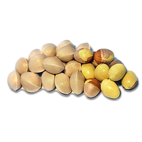 Ginko Nuts Beneficial Properties and Health Facts