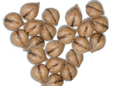 Heartnuts Nutrition Guide and Health Facts