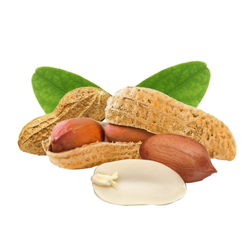 Peanuts Nutrition Values and Health Information