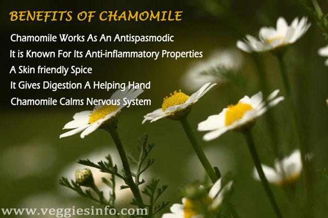 Chamomile Health Benefits