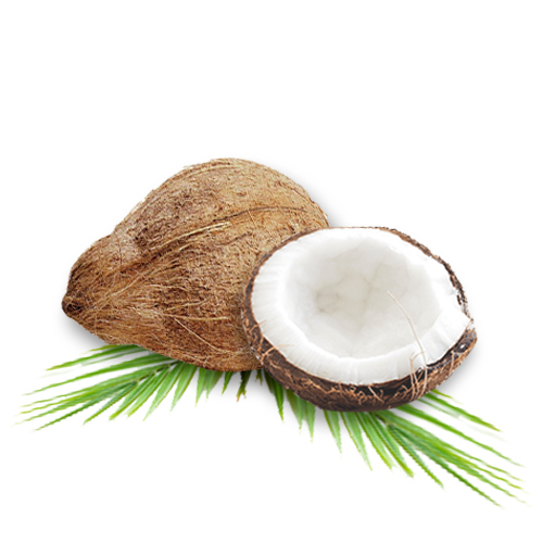 Coconut Food Source and Its Health Benefits