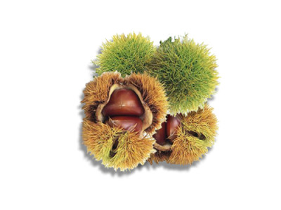Sweet Chestnut Uses and Nutritional Benefits