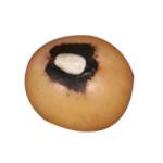 Bambara Groundnut Nutritional Value