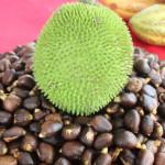 Breadnut for various treatement