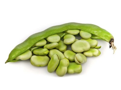 Fava Beans Growth and its Medicinal Uses