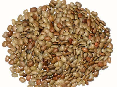 Horsegram Health Benefits And Its Various uses