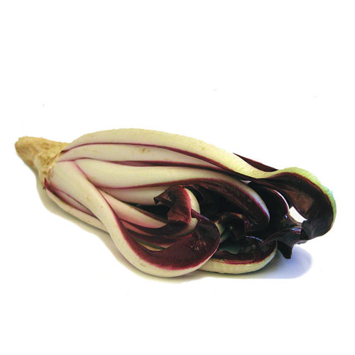 Italian Chicory Properties and Its Uses
