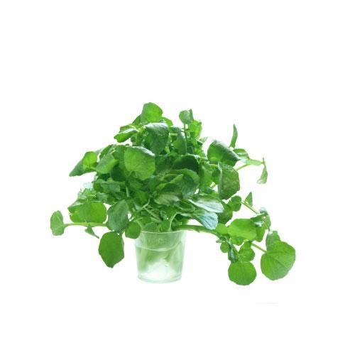 Land Cress Leafy Vegetable Health Benefits