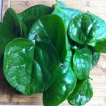 Malabar Spinach Medicinal Values