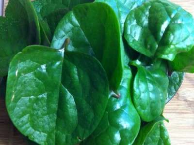 Malabar Spinach Unknown Medicinal Values