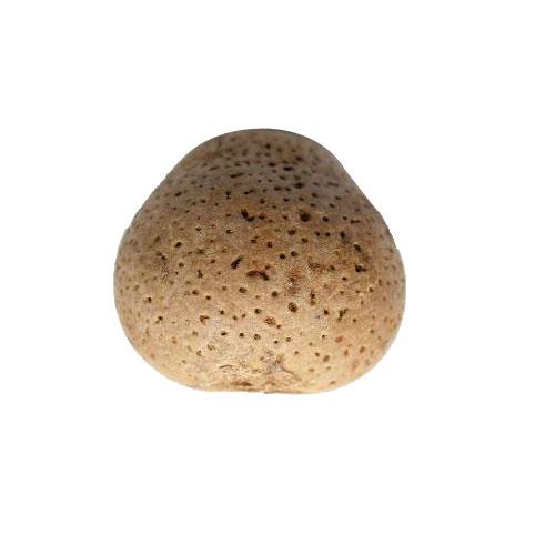 Mongongo Seeds Oil Benefits And Medicinal Uses