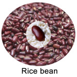 Various Uses Of Rice Bean