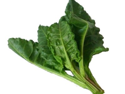 Sea Beet Aspects And Its Medicinal Uses