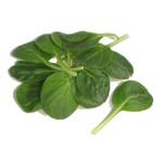 Leafy Tatsoi