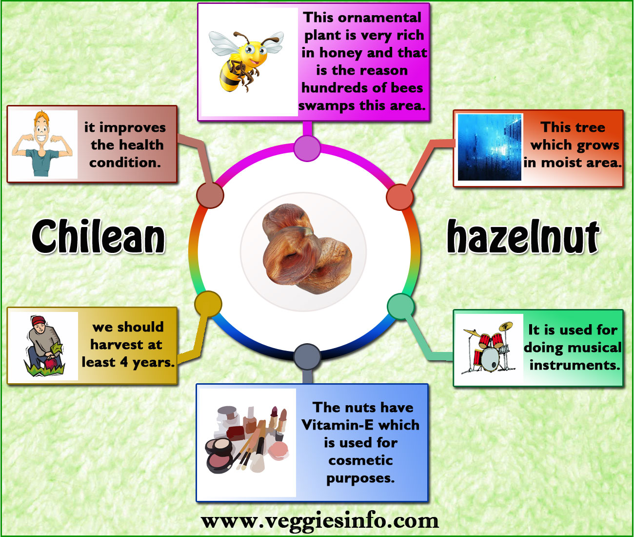 Purpose of Chilean Hazelnut