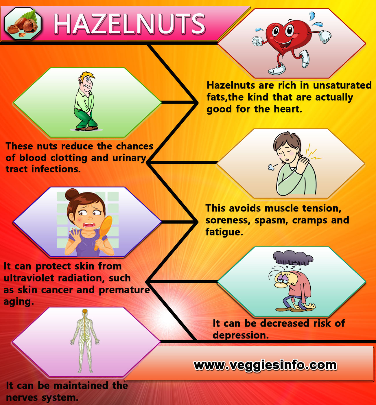 Hazelnuts Nutrition Value And Health Benefits Veggies Info