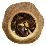 Properties Of Paradise Nut