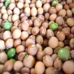 Uses Of Pigeon Pea