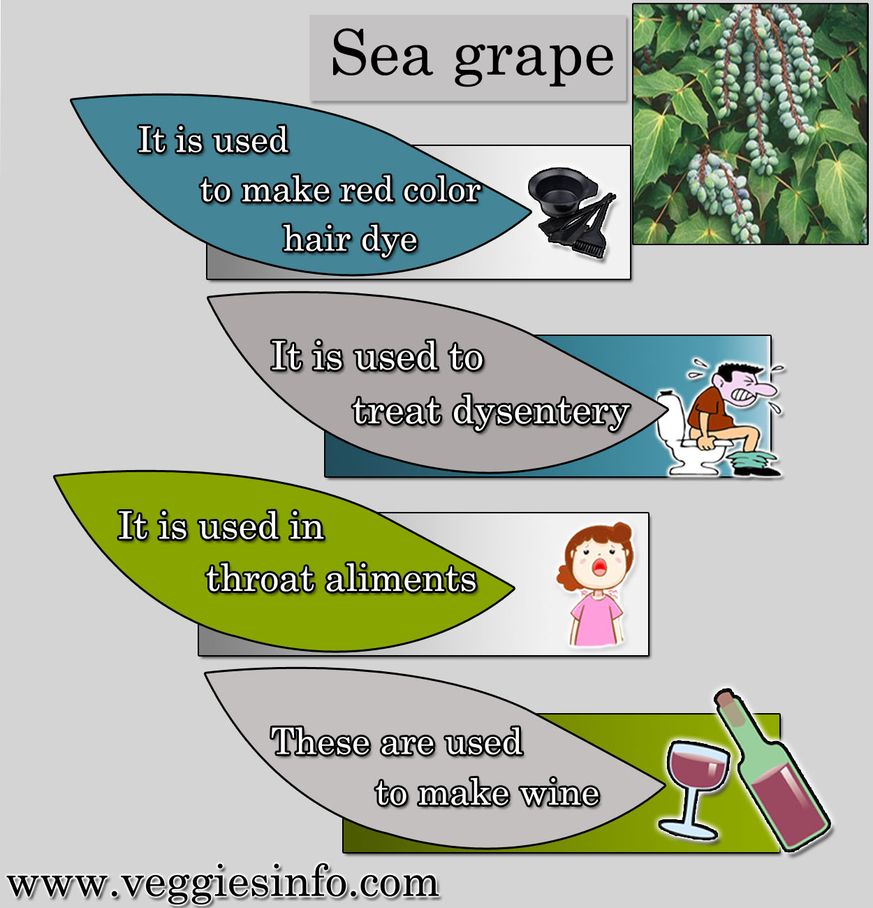 Health Benefits of Sea Grape