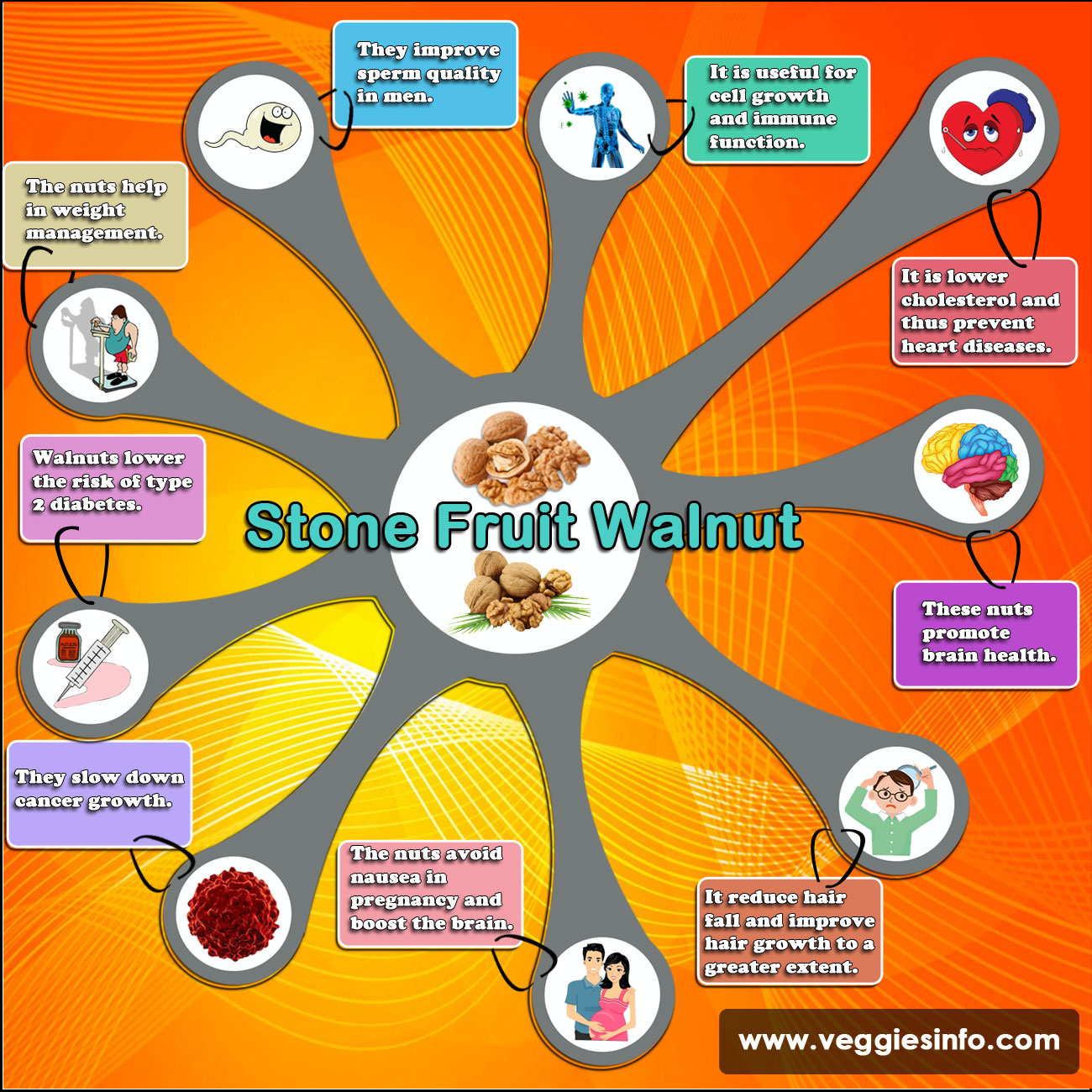Stone Fruit Walnut Uses and Health Benefits | Veggies Info