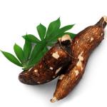Cassava Uses