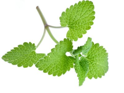 Catnip Oil Benefits And Its Uses