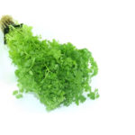Various Uses Of Chervil