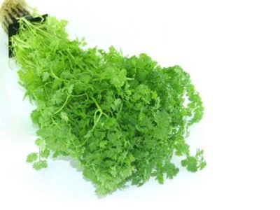 Chervil Properties And Its Uses