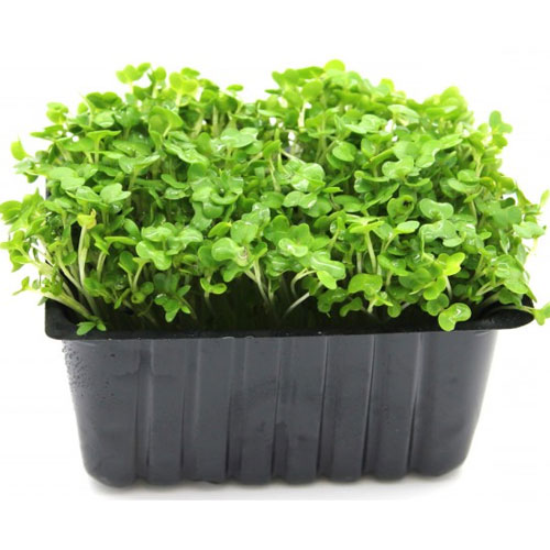 Cress | Garden Cress – Medicinal Values