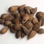 Ethiopian Cardamom Seeds Benefits