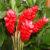 ginger-flower-nutritional-value