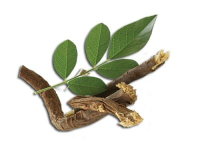 Licorice Medicinal Values And Facts
