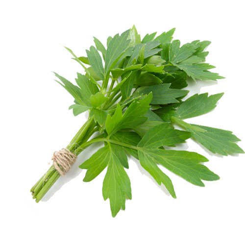 Lovage Facts And Medicinal Benefits