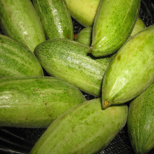 Pointed Gourd Uses And Nutritional Facts