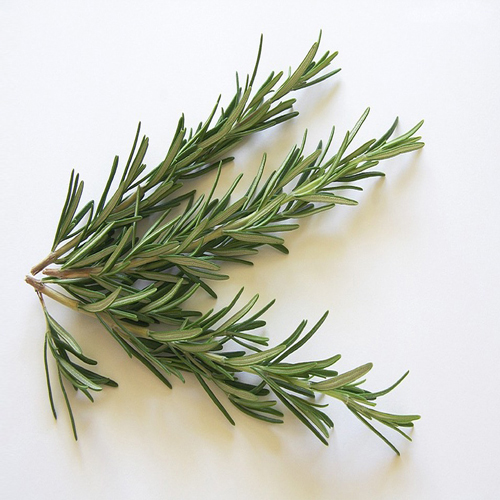 Rosemary Interesting Benefits And Uses