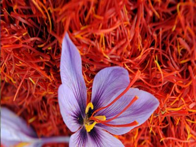 Saffron History Origin Growth And Its Various Benefits