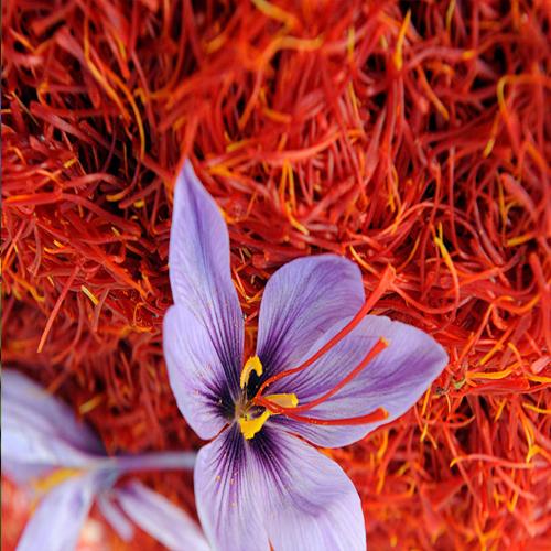 Saffron History Origin Growth And Its Various Benefits