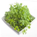 Salad Burnet Medicinal Values