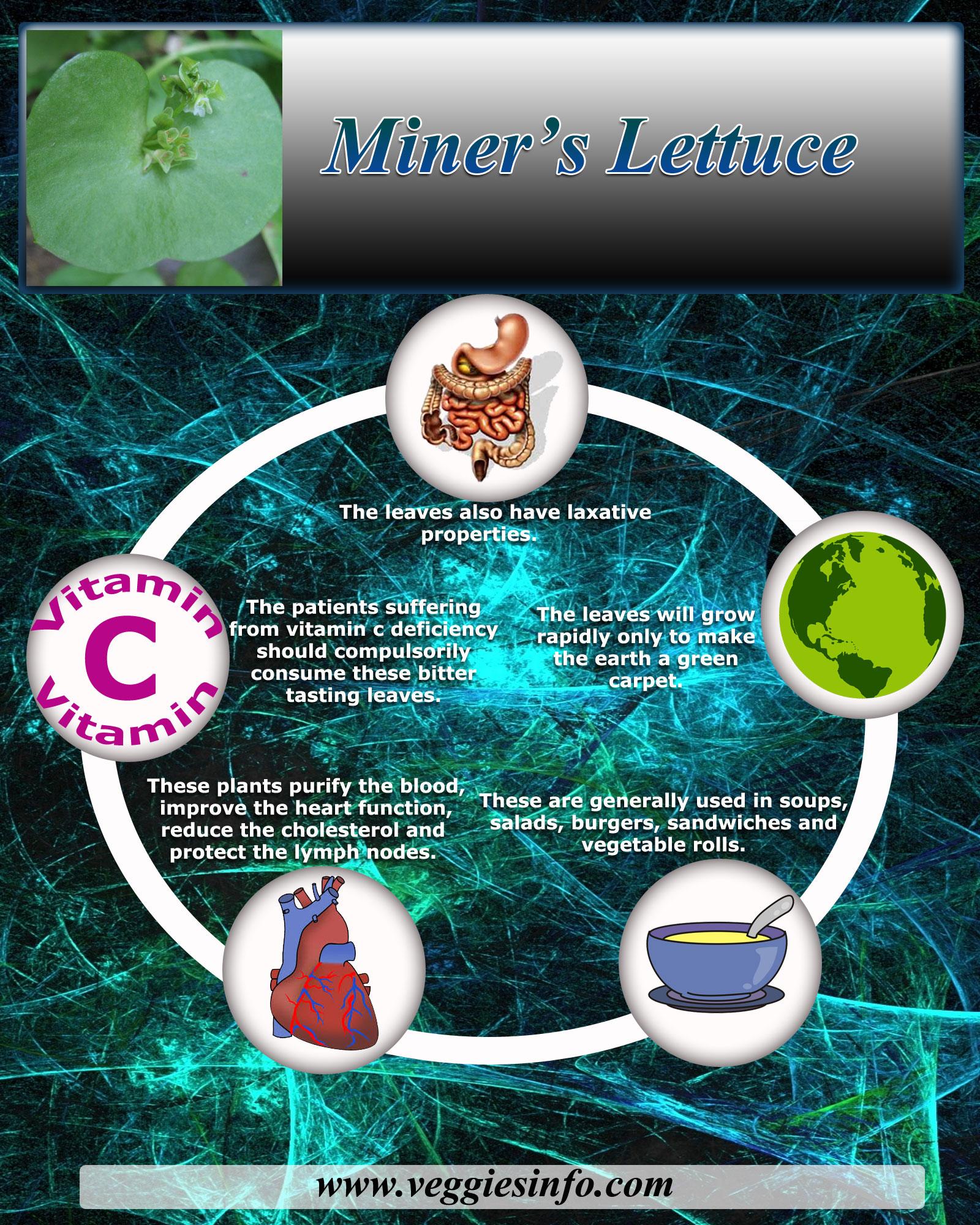 Nutritional Values of Miner's Lettuce